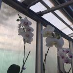 The residents of the retirement community have an Orchid house with a controlled environment