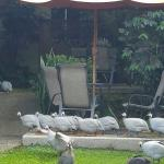 Costa Rican Turkeys?
