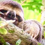 Picture of a sloth Jason took through his scope!