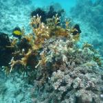 Recovery on damaged reef