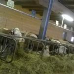 Photo de Holiday Farm La Péra Doussa