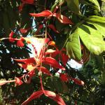 Décor colonial soigné et fleur exotique