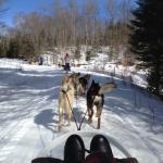 North Ridge Ranch - Dog Sledding Photo
