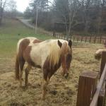 Horse Creek Stable Bed and Breakfast Foto