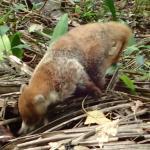 Lamanai Eco Adventures Foto