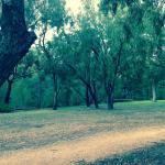 Cootamundra Walk