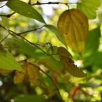 растительный мир Канди