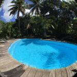 La piscine au coeur du jardin tropical