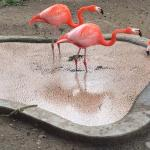 Flamingo feeding pond