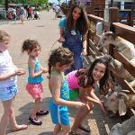 the #1 petting zoo on Long Island