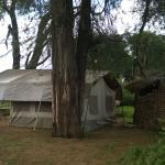 Foto de Lion King Bush Camp