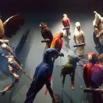 musée de l'histoire naturelle