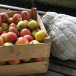 Vi bruger frugt og grønt fra egen have