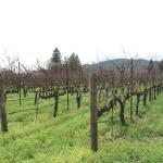 Hopper Creek Winery