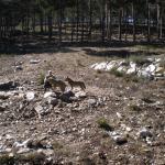 Centro del Lobo Ibérico
