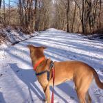 Trail walking this winter.