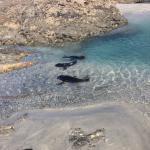seals at wharariki beach, Farewell Spit