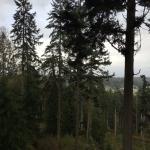 Canopy Tours Northwest Foto