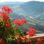 Piamontes kullar