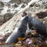 Seal Swim Kaikoura Foto