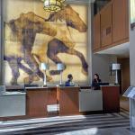 Hilton Arlington Foto