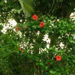 Photo de Tropico de Capricornio