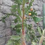 Adorno de cactus a la entrada del restaurante.
