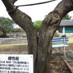 Tsubakihana Garden Squirrel Village Photo