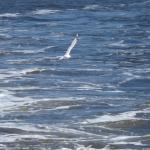 This bird followed the ferry