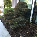 Cool shrubbery near the front entrance