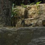 Лиса осталась жить в зоопарке