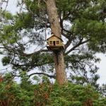 Naturland Forest Resort Foto