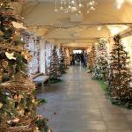Hallway of trees