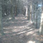 Fingal Wildlife Management Area