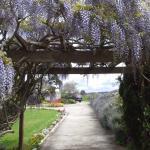 Entrance wysteria arch