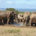 close to Addo's Elephant park