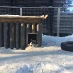 Arctic Husky Farm Foto