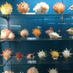 The best sea shell display I have ever seen!