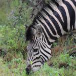 Arathusa Safari Lodge Resmi
