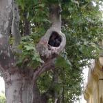 Los Huéspedes en el árbol del frente (Dos Palomas).