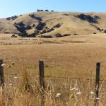 Typical Wairarapa hill farm scenery on the way to Lake Ferry