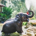 Phang Nga Elephant Park