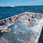 discount dolphin cruises