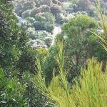 Beauty of the bush
