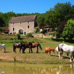 Les chevaux de la ferme équestres des eymaries