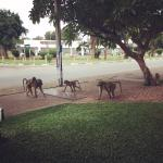Baboons running around outside the entrance!