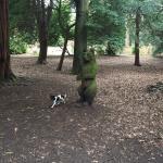 Ravenscraig Park