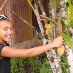 kAKOA Tree in Jodensavanne !