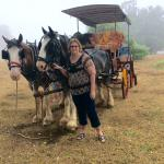Culla & Co Horse & Carriage Tour