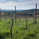 Youngberg Hill Vineyards & Inn Resmi